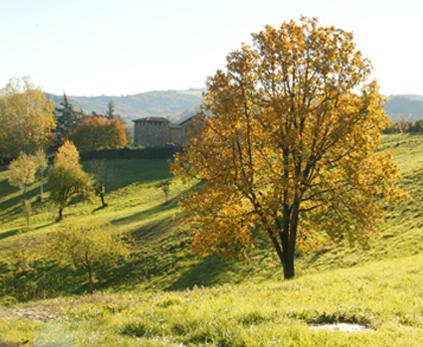 Tenuta di Aljano - le colline di Jano