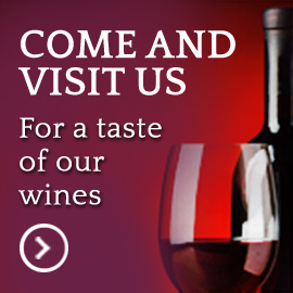 Come and visit us for a taste of our wines